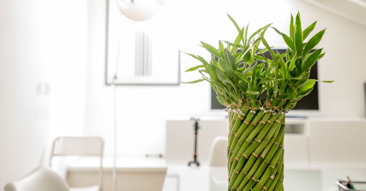 A delicately crafted bamboo plant in an all white room.