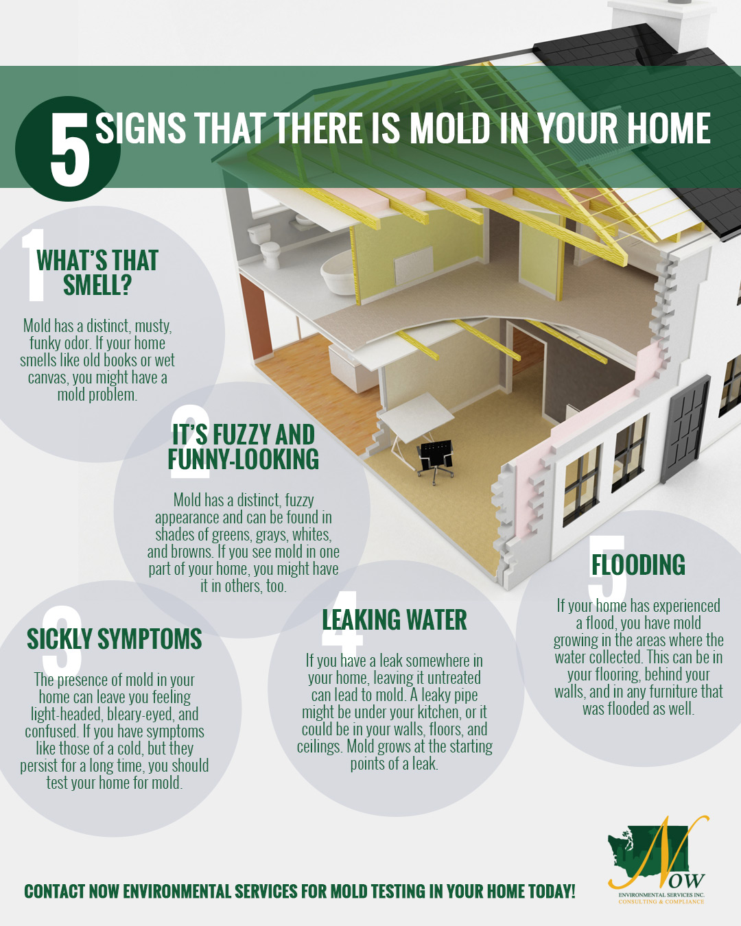 Mold Testing Seattle: 5 Signs That There Is Mold In Your Home