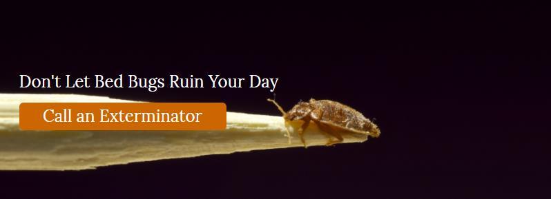 Bed Bug Exterminator