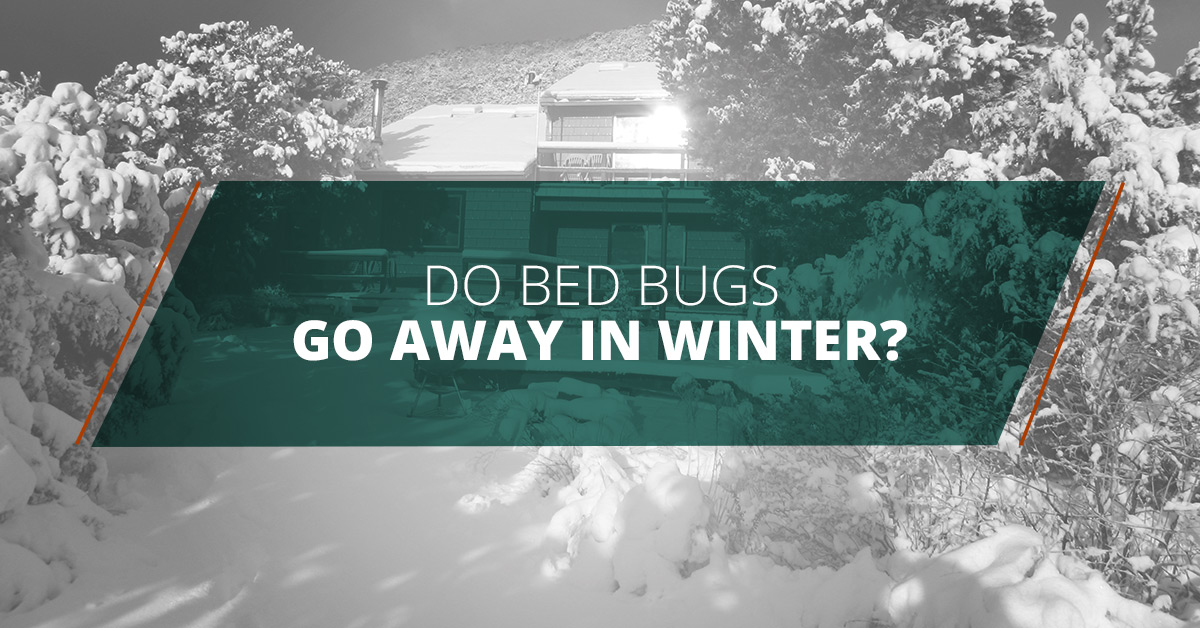 Good Do Bed Bugs Go Away In Winter?