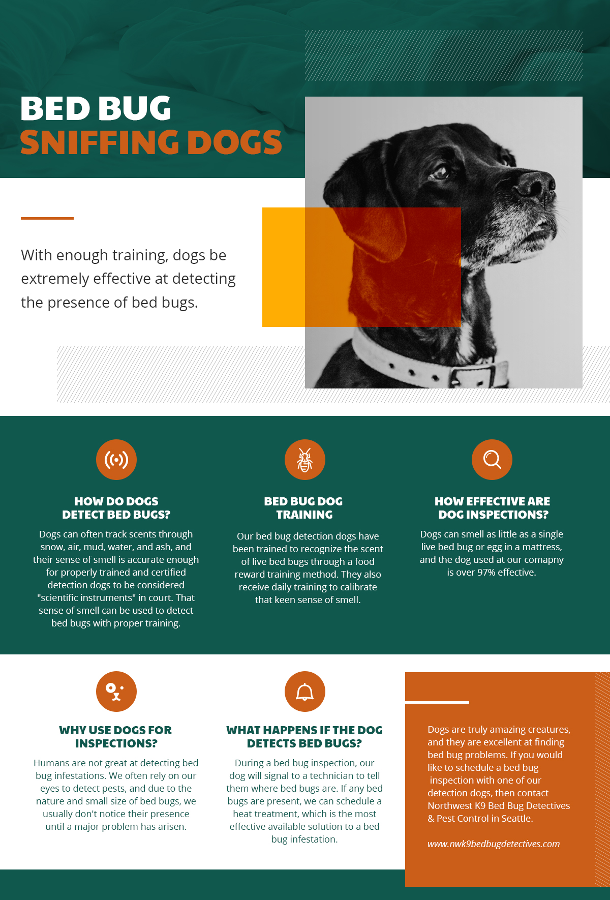 an infographic explaining the benefits of using bed bug detection dogs