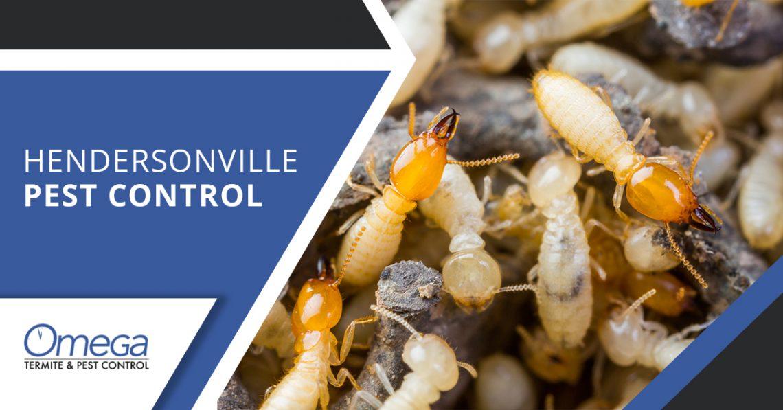 Omega Hendersonville Pest Control