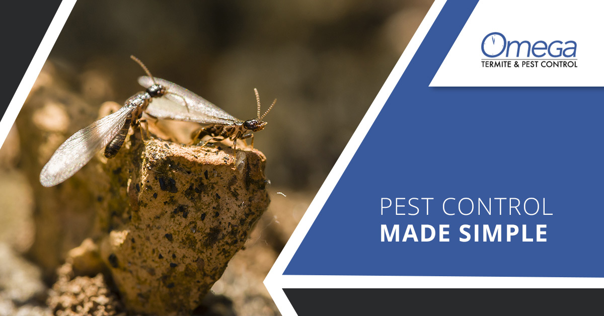 Pest Control Made Simple