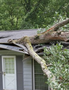 Tree that's fallen on a house