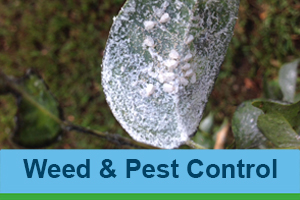 weed-and-pest-control
