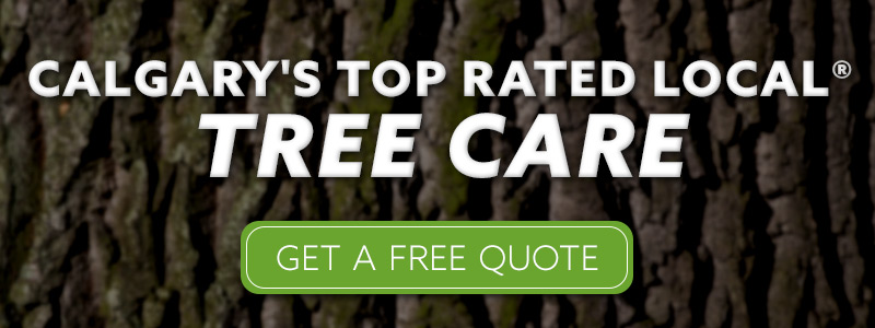 Calgary tree expert