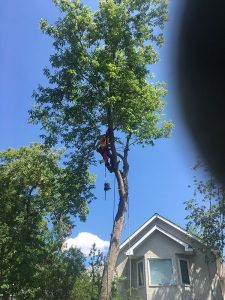Tree Trimming Calgary