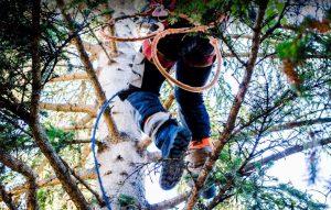Tree Services Calgary
