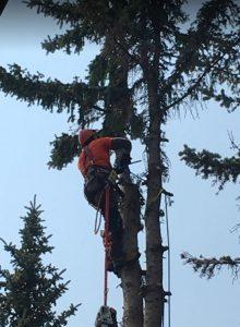 Calgary Tree Pruning