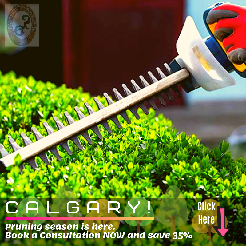 Calgary Trimming Services