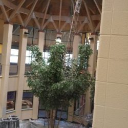 An image of the interior of a space with a large tree in the center and walls painted by Painting Plus of Colorado.