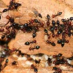 ants eating wood
