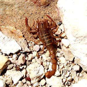 scorpionphoto