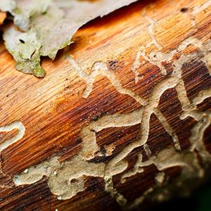 drywood1