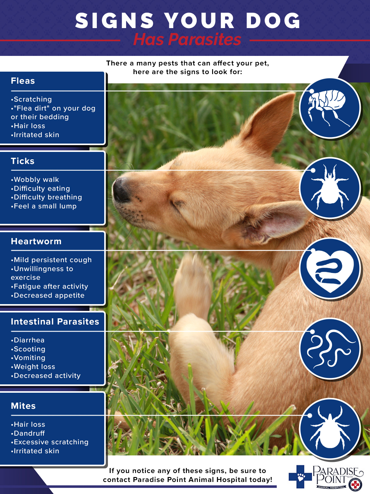 Infographic Signs Your Dog Has Parasites