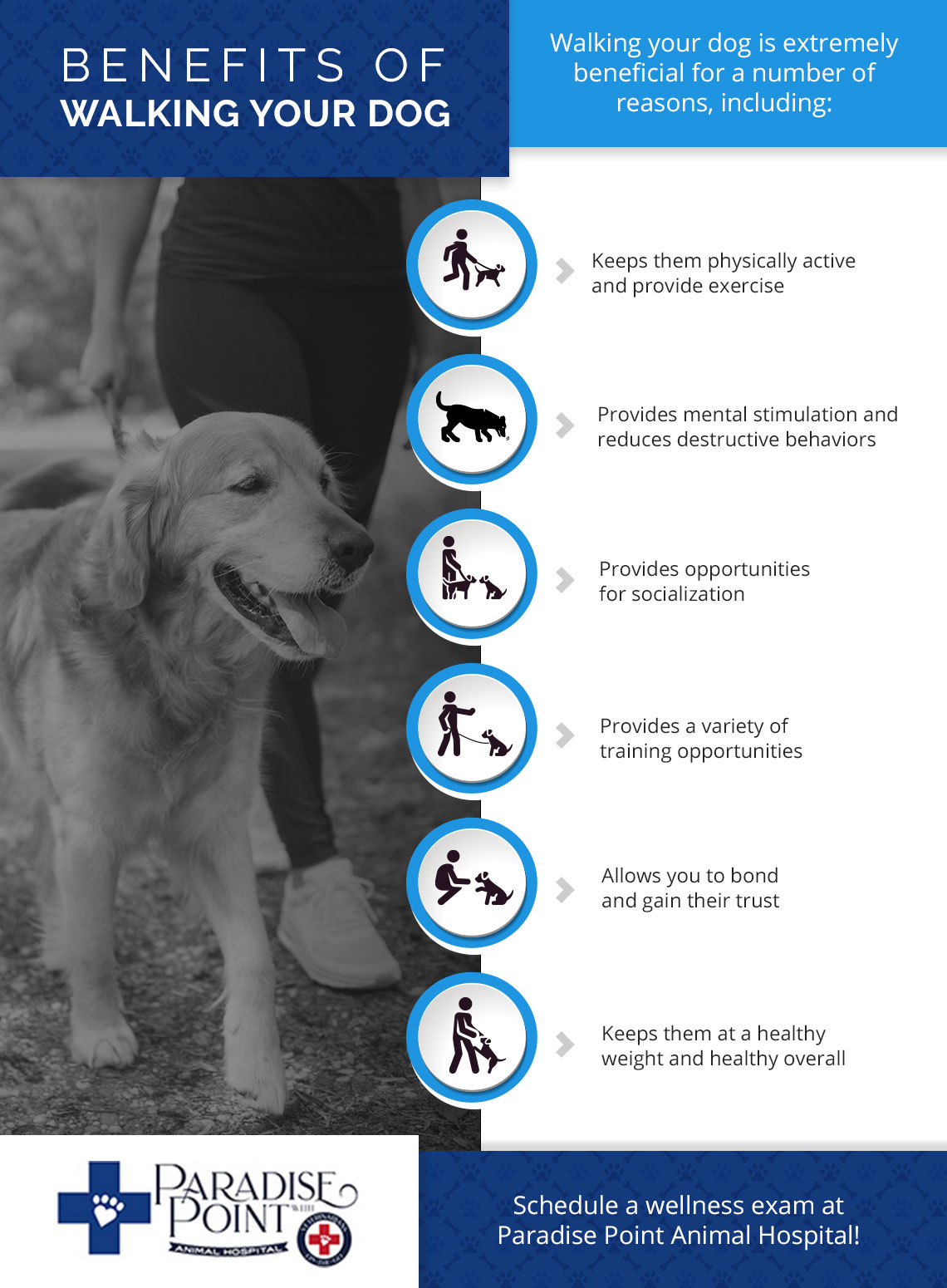 Benefits of Walking Your Dog Infographic