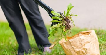 weed control services from personal lawn care memphis