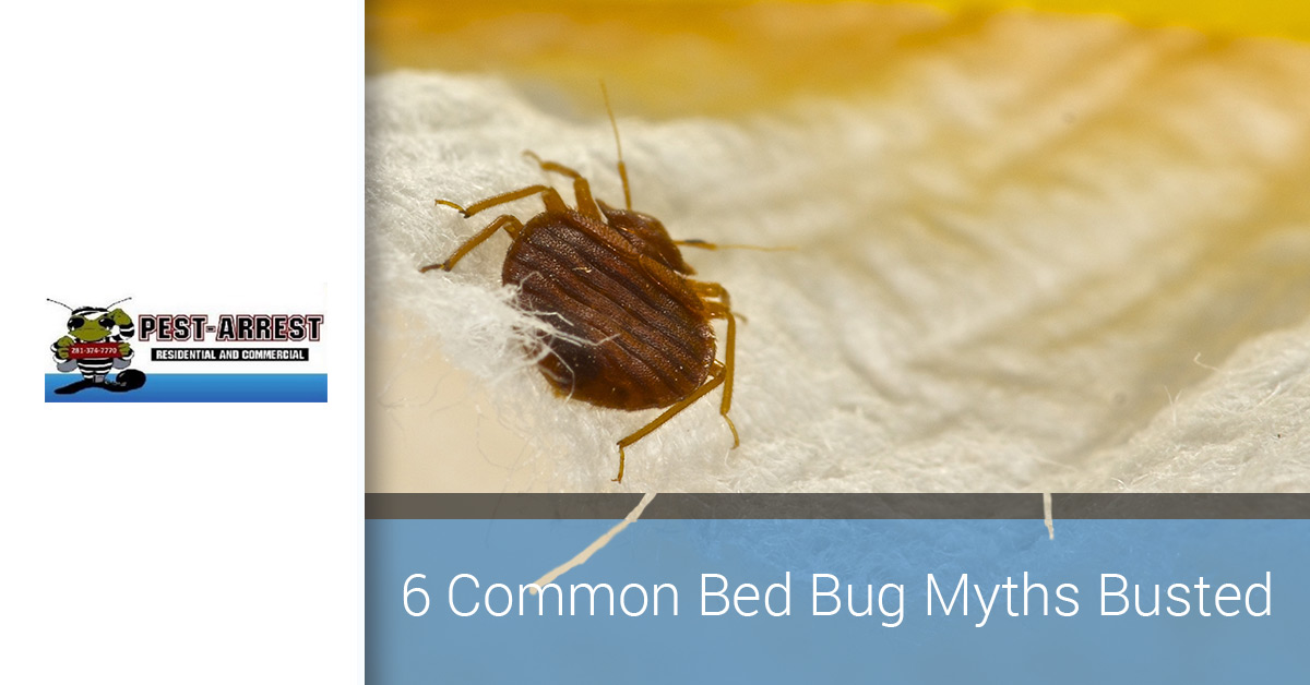 Bed Bug Prevention And Control Debunking 6 Common Myths