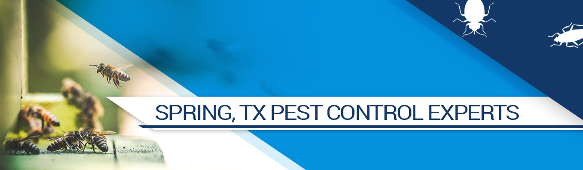 Pest Control Spring TX - Call Today For Your Free Pest