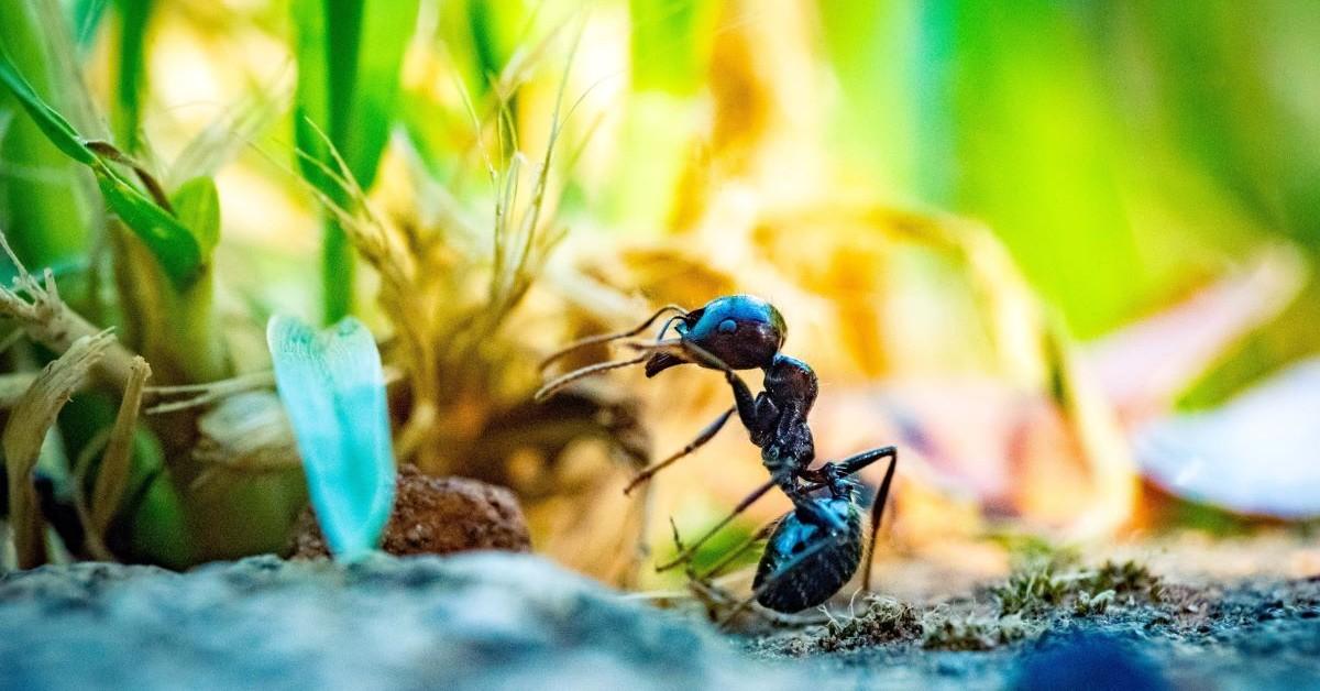 ant in a garden