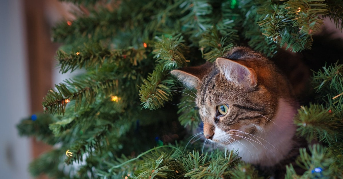 Holiday Safety Tips for Your Pet pets to vets los angeles