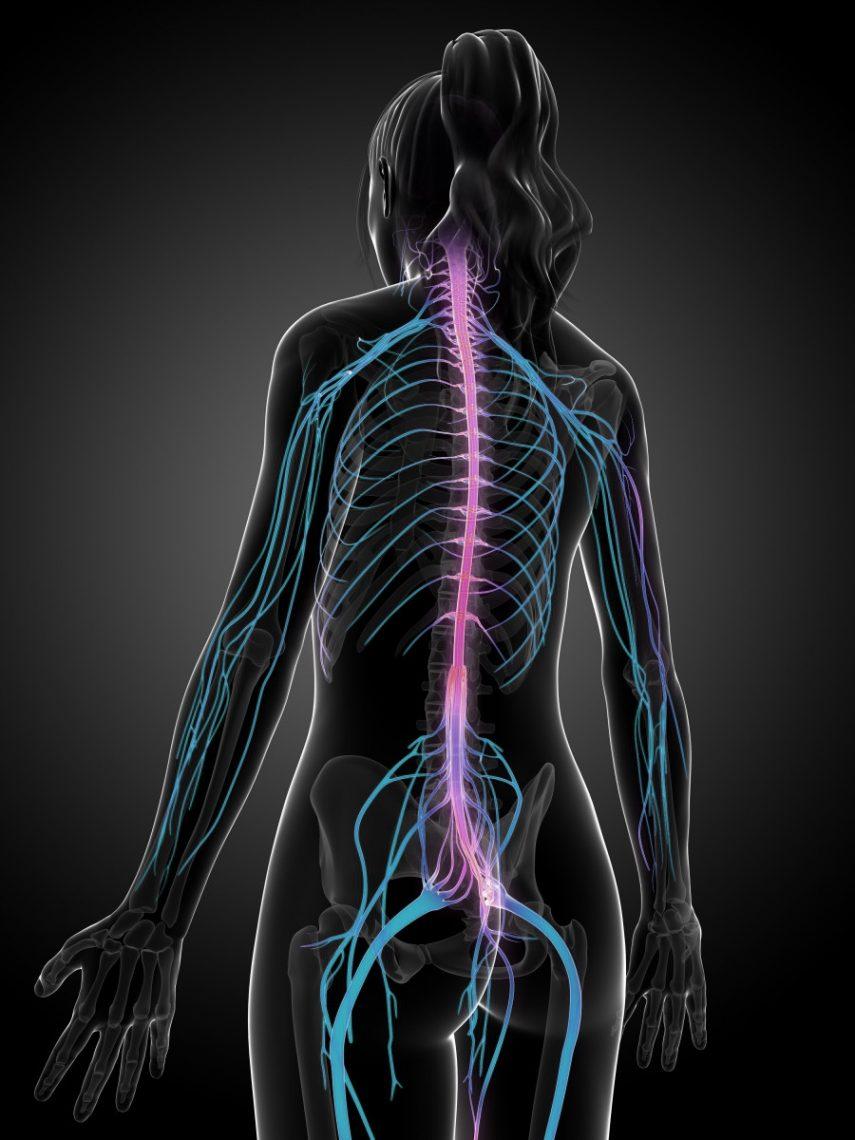 Neurology Clinic Phoenix: The Nervous System