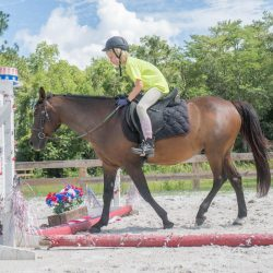 A USA themed riding lesson with obstacles - Pink Flamingo Stables