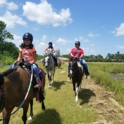 Taking a relaxing trail ride with horses - Pink Flamingo Stables