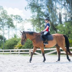 A horse and rider in our arena for a riding lesson - Pink Flamingo Stables