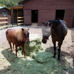 A pony and a horse having a snack at our stables - Pink Flamingo Stables