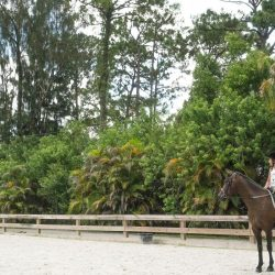 A horse and rider in our arena - Pink Flamingo Stables