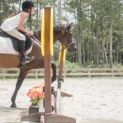 A horse and rider mid jump during a lesson - Pink Flamingo Stables