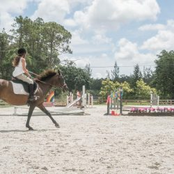 A rider and horse trotting up to a jump - Pink Flamingo Stables
