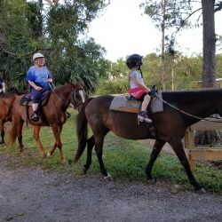 Three horses in a line on a trail ride - Pink Flamingo Stables