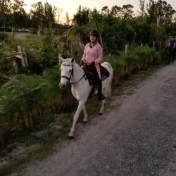A white horse on a trail ride with rider - Pink Flamingo Stables