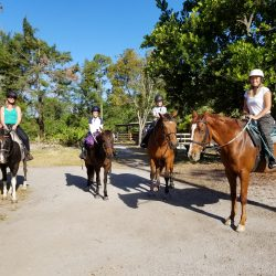 A group of four horses and riders before their trail ride - Pink Flamingo Stables