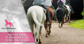 Why Trail Riding on Horseback Is The Perfect Office Retreat