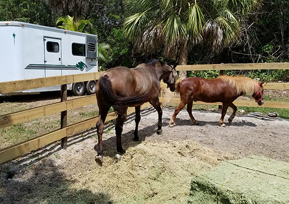 horses in pen