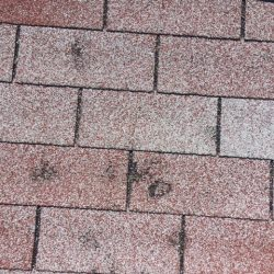 Up-close photo of damaged shingles on roof