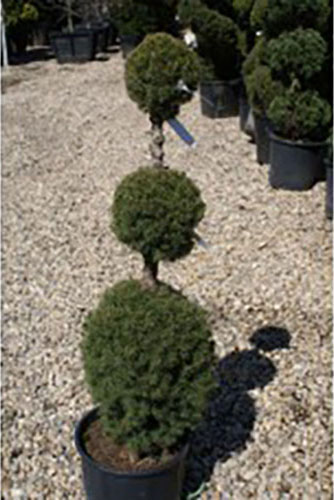 Topiaries Nassau County Add Something Unique To Your