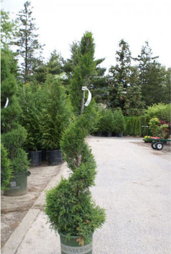 Topiaries Nassau County - Add Something Unique To Your Landscaping
