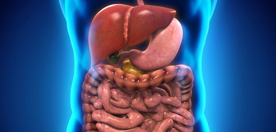 Graphic of the liver, stomach, gall bladder, pancreas, intestines