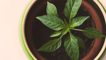 plant-image2