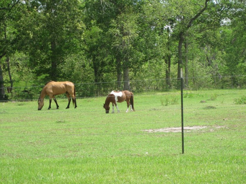 We have horse facilities on our properties for sale!