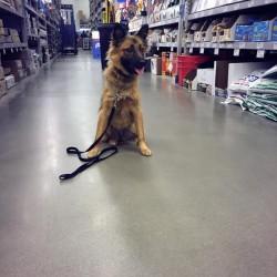 puppy training courses Elizabeth, Colorado