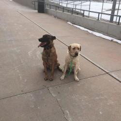 puppy training camps Elizabeth, Colorado