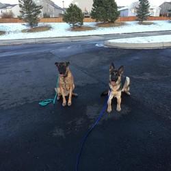 dog training camps Elizabeth, Colorado