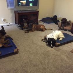 dog trainer Elizabeth, Colorado