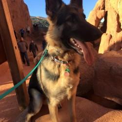 group dog training courses Elizabeth, Colorado
