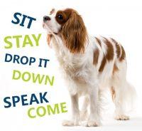 dog behavior training Elizabeth, Colorado